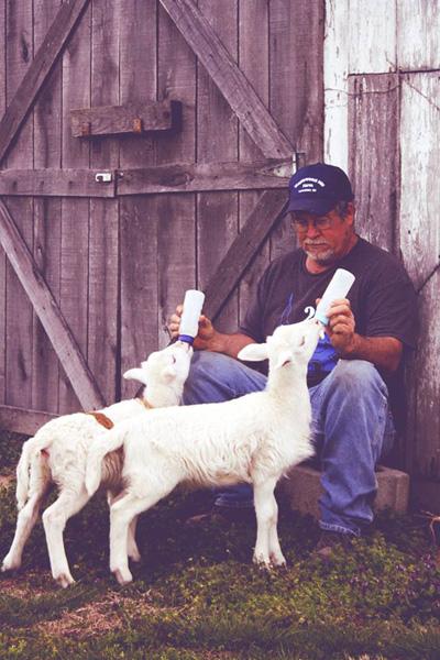 Feeding the twin lambs